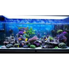 Купить большой аквариум в квартиру
