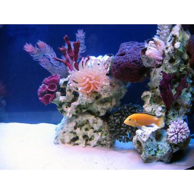 Что такое аквариум-псевдориф?