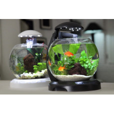 Как подобрать рыбок в аквариуме?