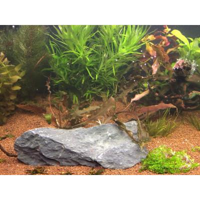 Почему фосфаты в аквариуме вредны?