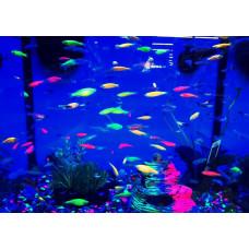 Светящиеся флуоресцентные обитатели аквариумов