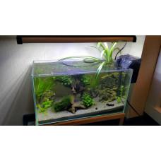 Сколько рыбок можно держать в аквариуме?