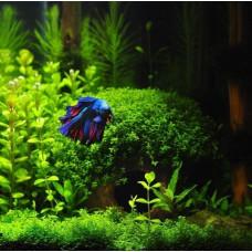 Как почистить аквариум заросший растениями?