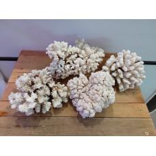 Коралл Флауэр 17-20 см