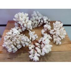 Коралл Флауэр 12-17 см