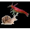 Моллюски и креветки